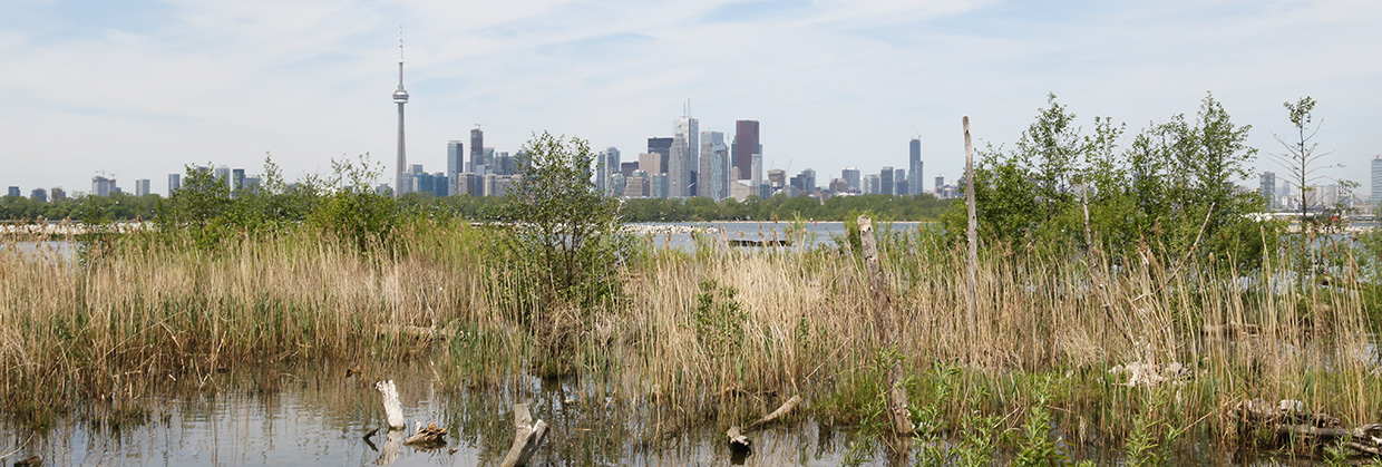 view of the Toronto skyline from Tommy Thompson Park