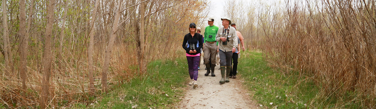 bird watchers on a trail at Tommy Thompson Park