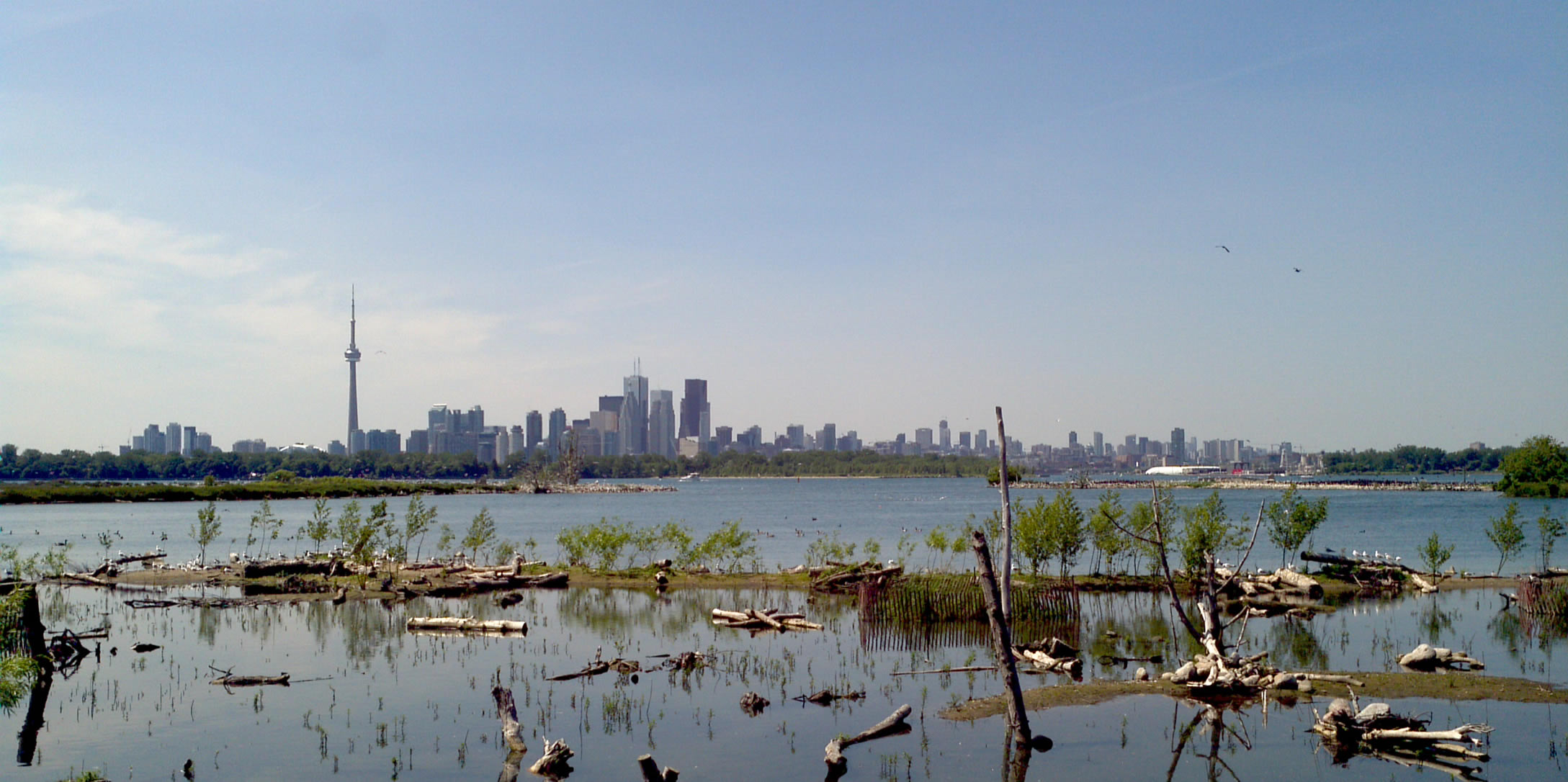 A view of Toronto across a newly constructed wetland at Tommy Thompson Park.