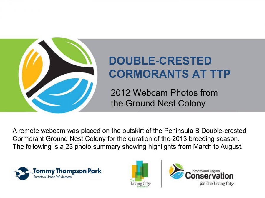 cover page of cormorant webcam gallery