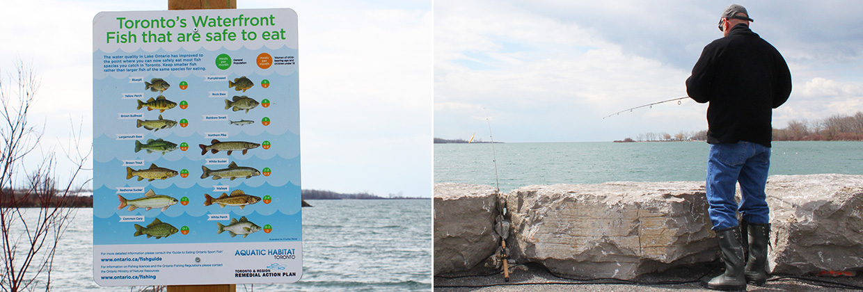 scenes of recreational fishing at Tommy Thompson Park