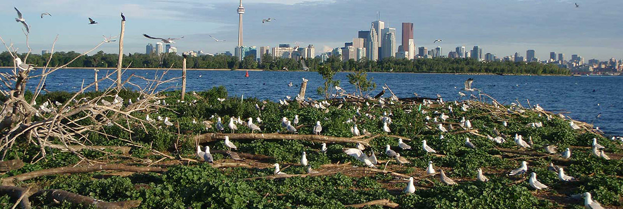 colony of waterbirds at Tommy Thompson Park