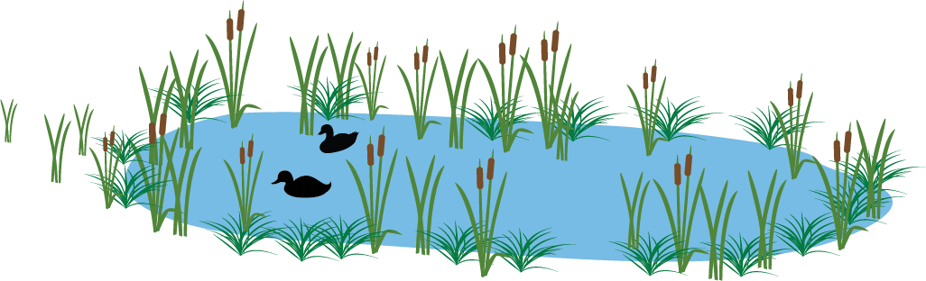 graphic showing ducks swimming in pond