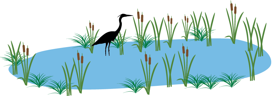 graphic showing blue heron in wetland