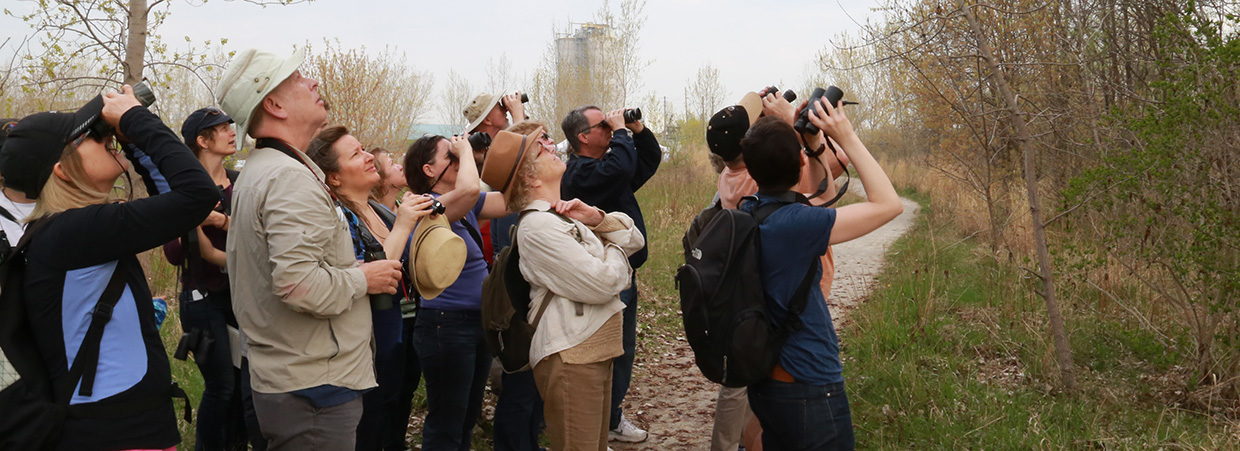 visitors bird watching at Tommy Thompson Park