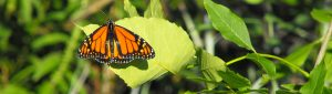 9th Annual Butterfly Festival @ Tommy Thompson Park |  |  |