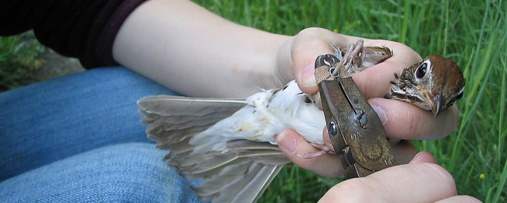 ttp-birdbanding1