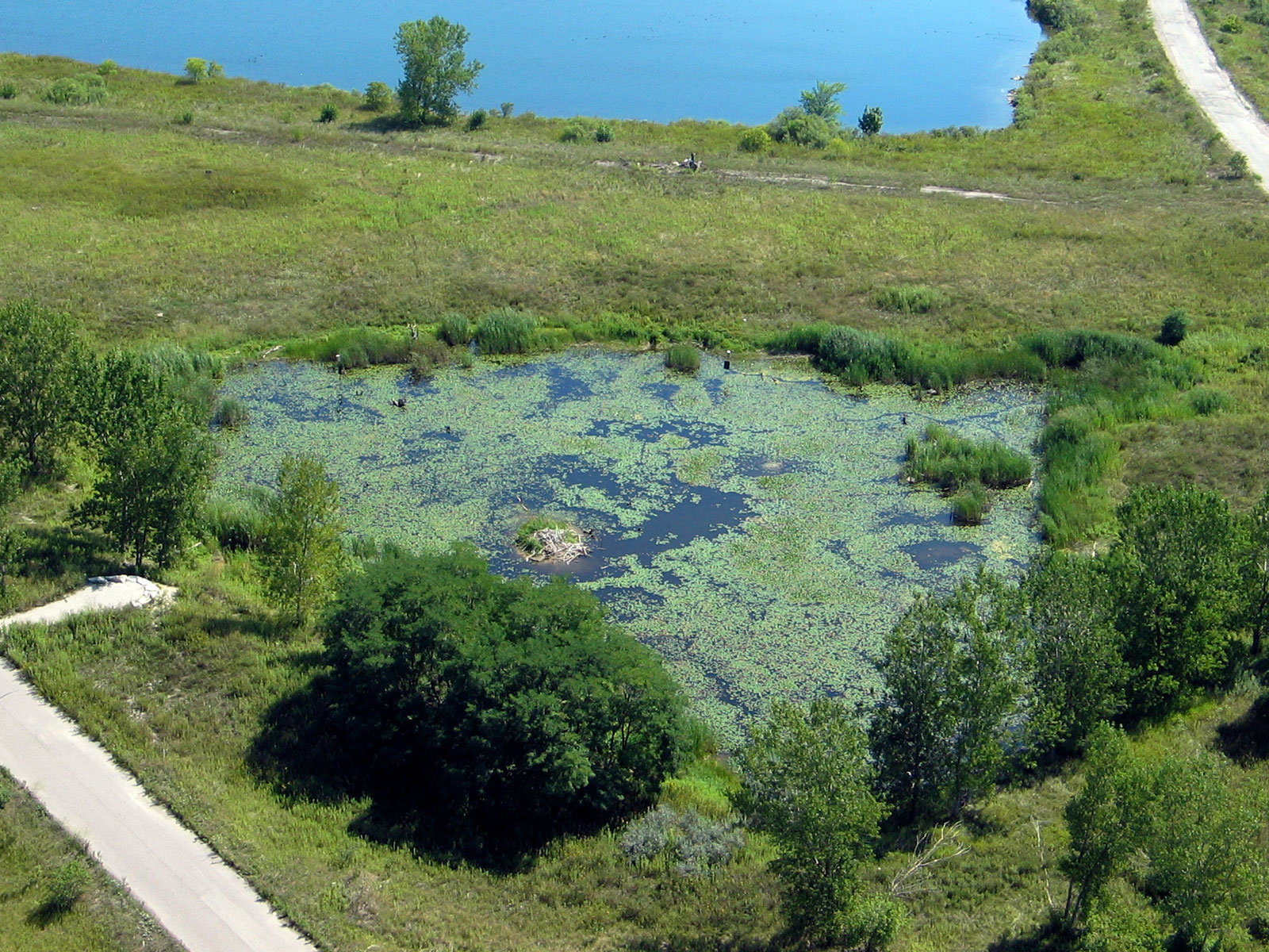 Triangle Pond - A restoration feature at Tommy Thompson Park