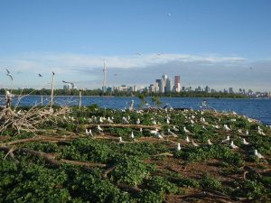 Bird Walks @ Tommy Thompson Park