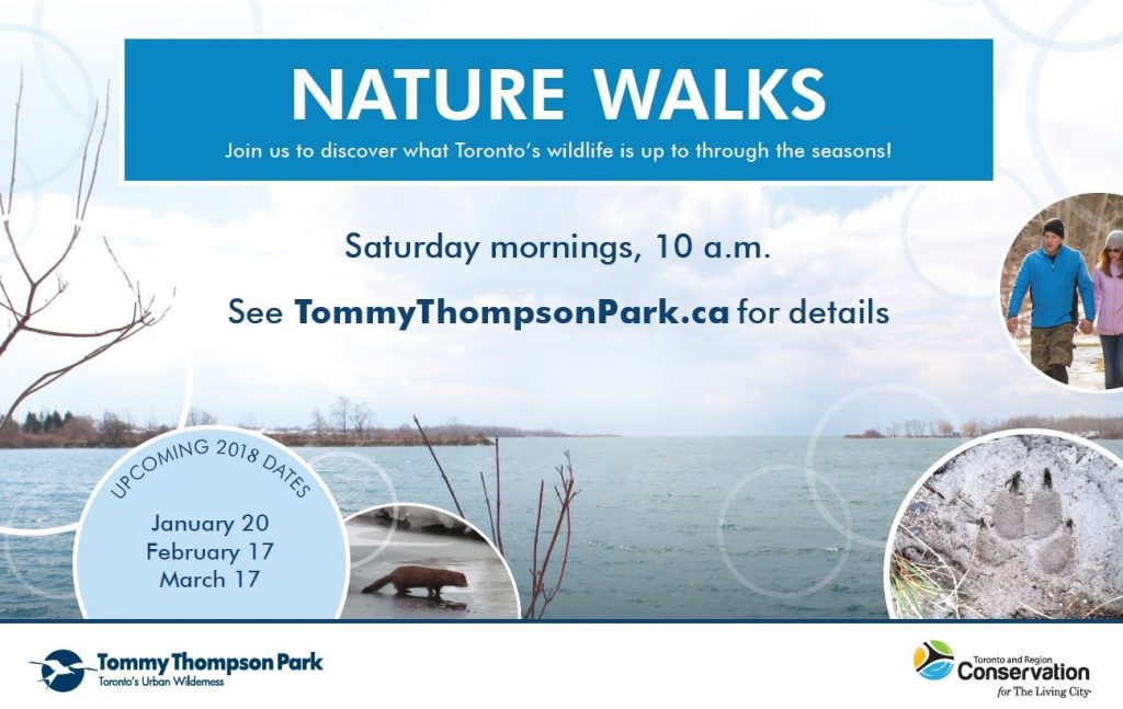 Nature Walks at Tommy Thompson Park