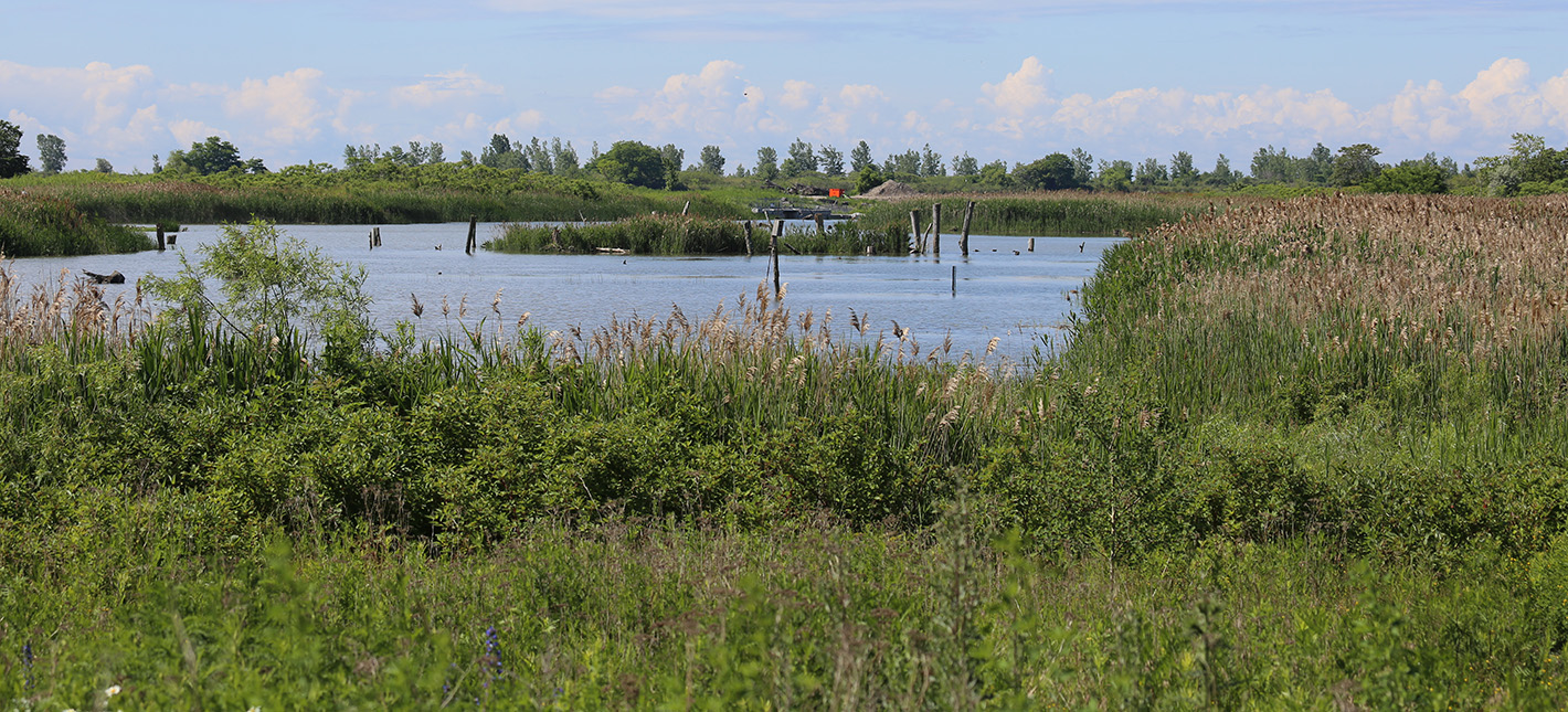 wetland area at Tommy Thompson Park