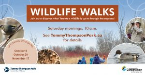 Wildlife Walks @ Tommy Thompson Park