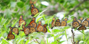 Annual Butterfly Festival @ Tommy Thompson Park | Toronto | Ontario | Canada