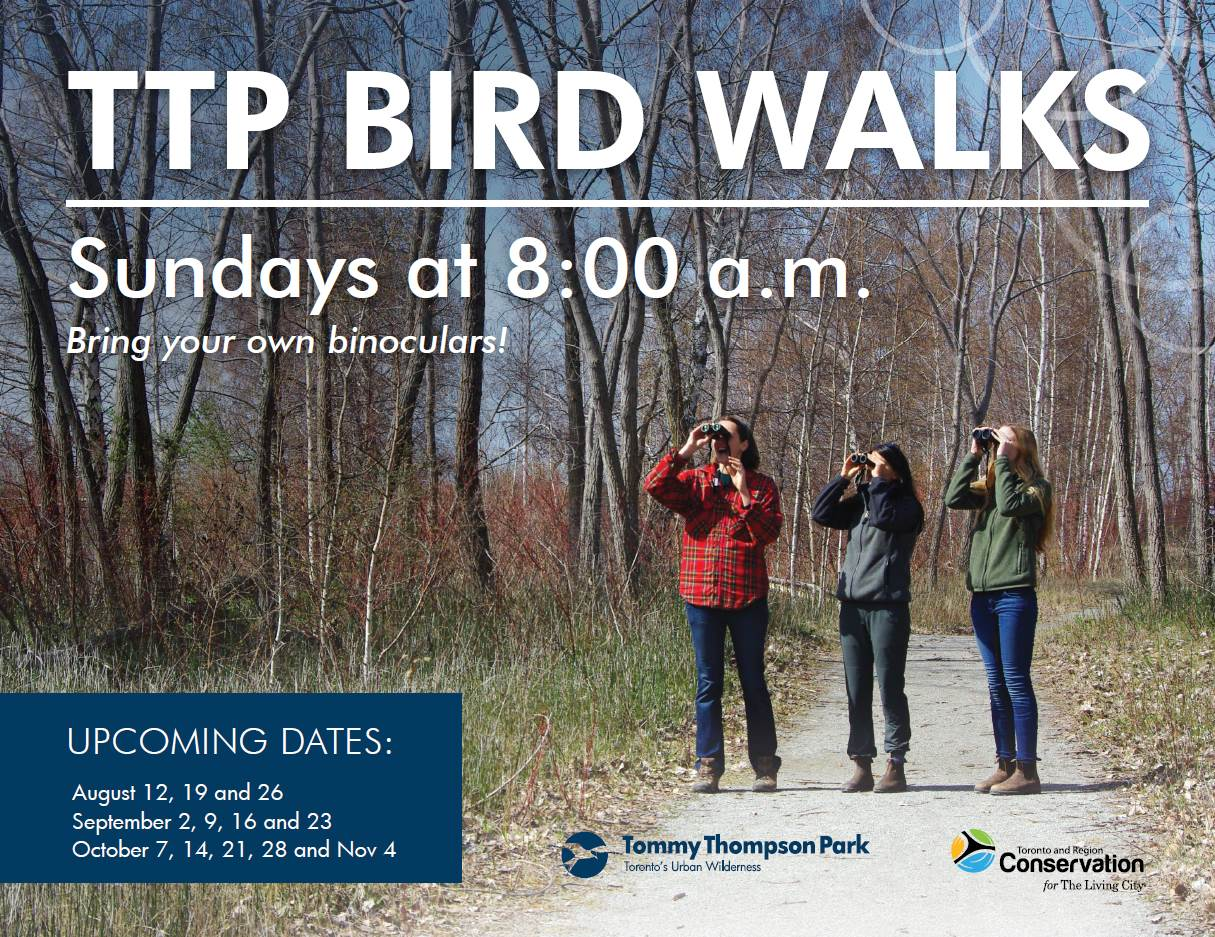 Tommy Thompson Park Bird Walks