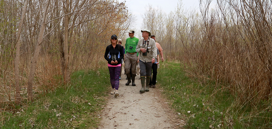 birders at Tommy Thompson Park