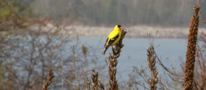 Birding by Ear: Learning to Hear the Avian Landscape @ Tommy Thompson Park | Toronto | Ontario | Canada