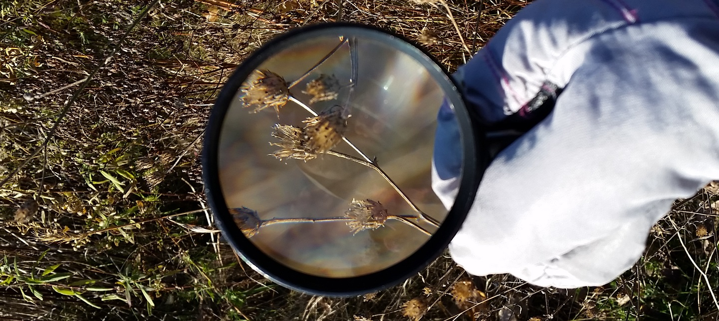 PA Nature day camper uses magnifying glass to examine plant