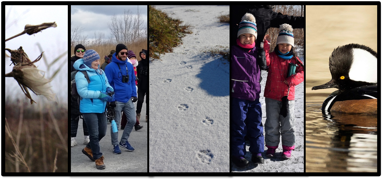 Photo collage of plants, tracks, people, and waterfowl in winter.