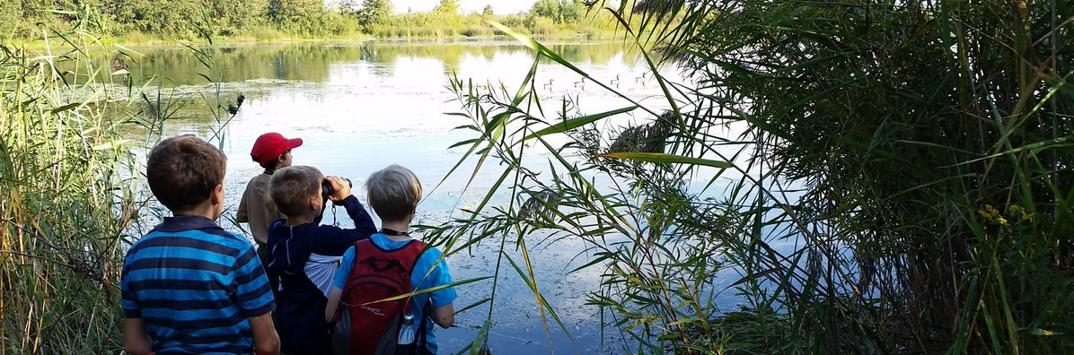 summer campers explore wetland at Tommy Thompson Park