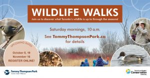 Wildlife Walk @ Tommy Thompson Park Nature Centre