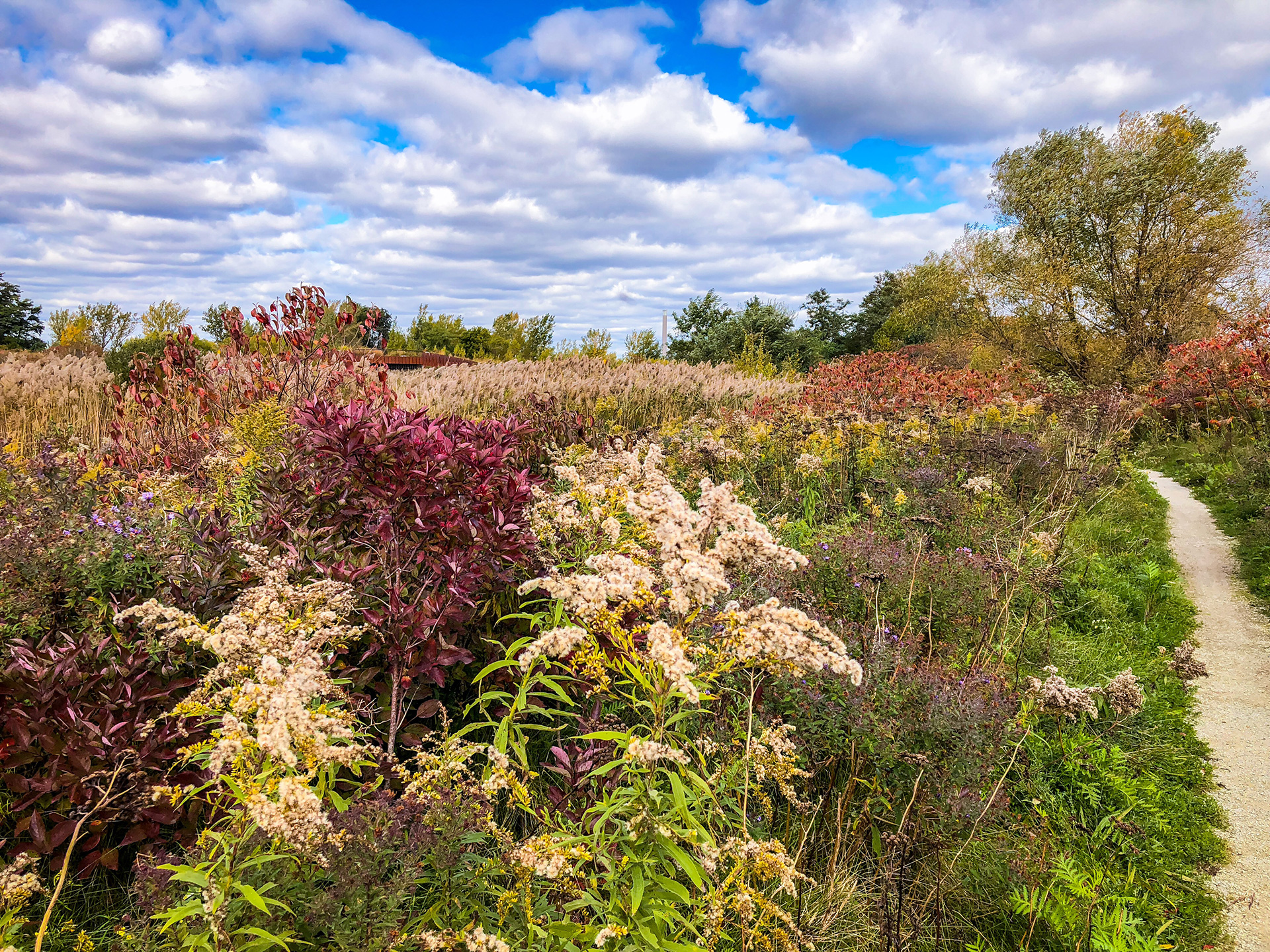A trail through a meadow at Tommy Thompson Park in the autumn. Photo by Amanda Kohler.