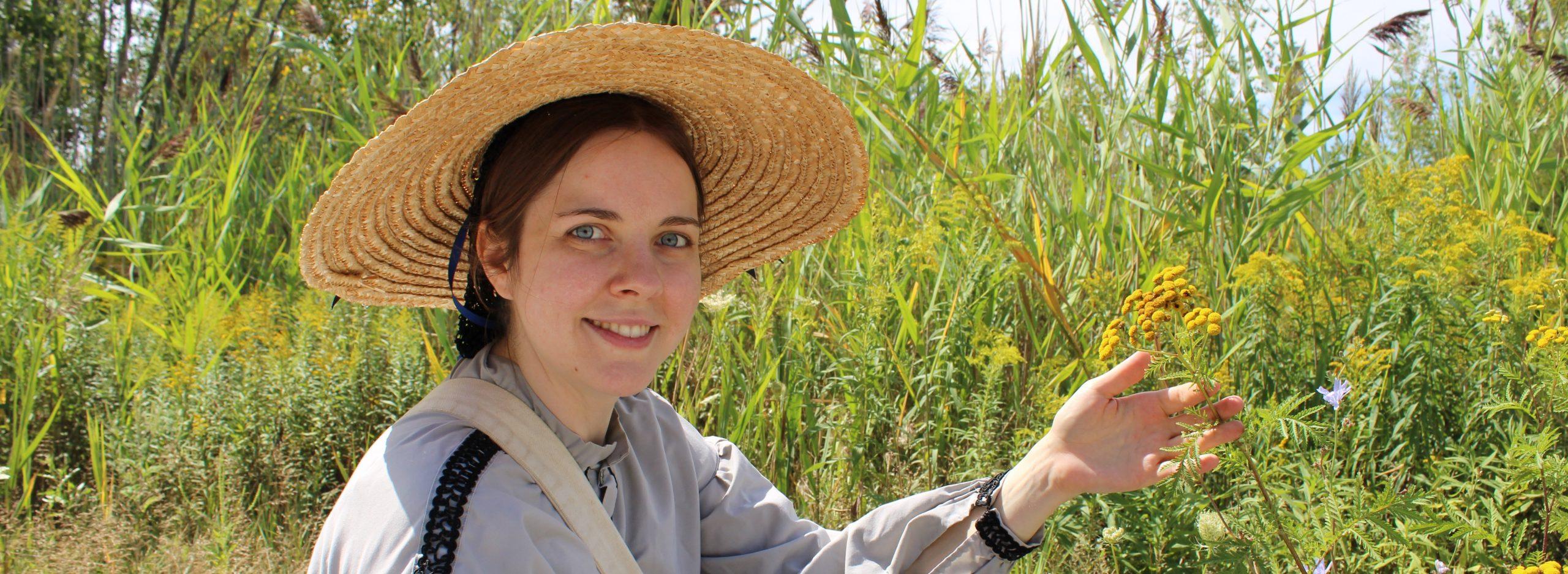 Black Creek Pioneer Village history actor in costume examines Common Tansy plant